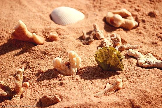 Кораллы на красном песке Красного моря