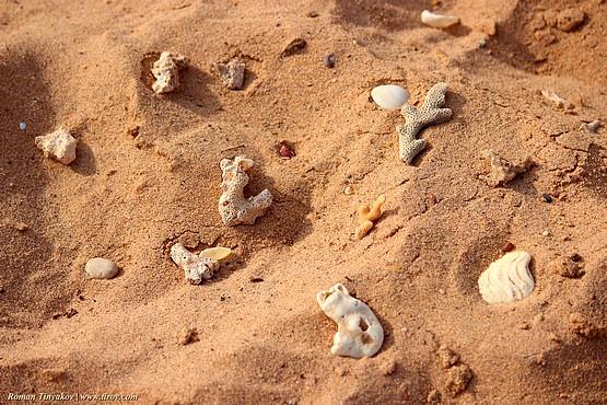 Кораллы на песке у моря