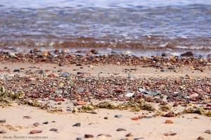 Кораллы у Красного моря в окружении камней, ракушек и водорослей