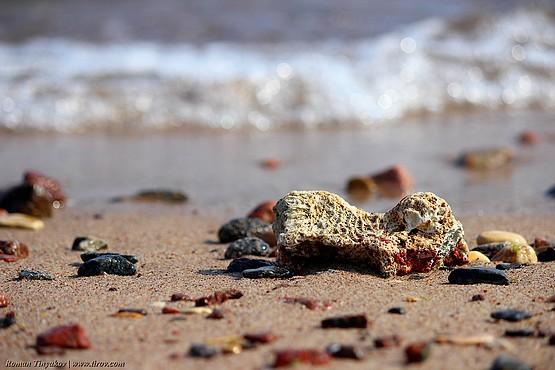 На берегу у Красного моря