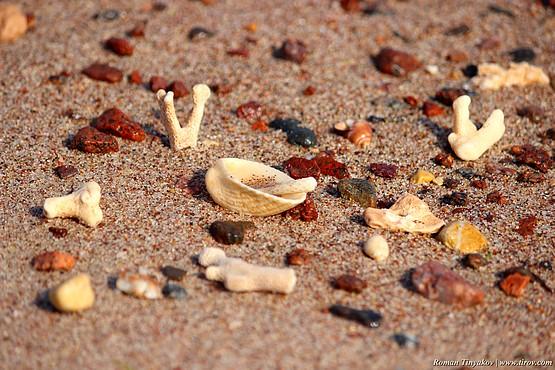 Пляж усыпан кораллами у Красного моря в Египте