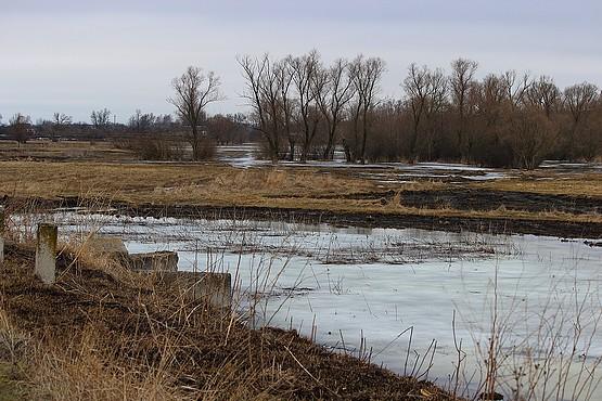 Последний день зимы на лугу в Алексеевке
