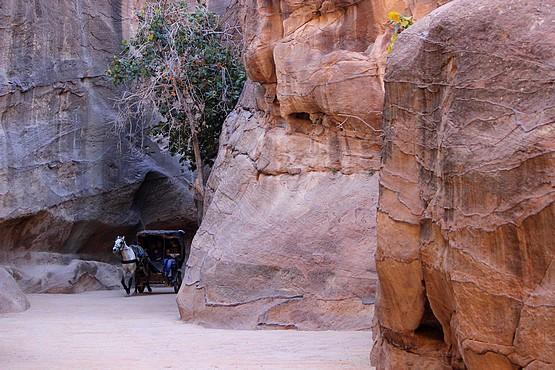 На белом коне по ущелью в Иордании