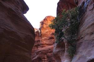 Дерево растёт на отвесной скале
