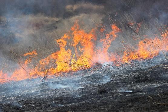 Пепел у огня