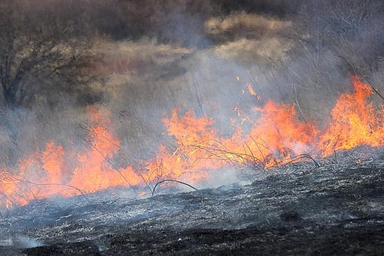 Огонь и пепел выгоревшей травы в балке
