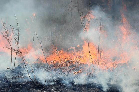 Фотография огня поглощающего всё на своём пути