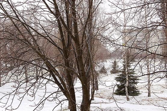 Зима вернулась в конце марта
