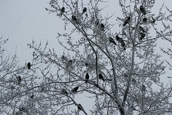Украшенный снегом птичий дом