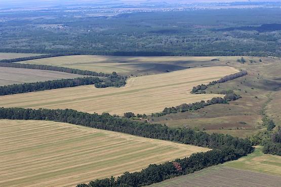 Поля и леса Харьковской области