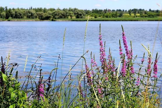 Цветы на берегу Берекского водохранилища