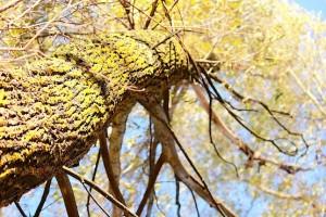 Деревья в золоте