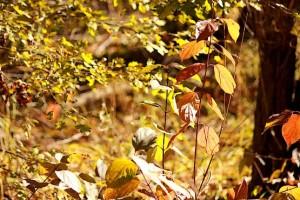 Листья в лучах солнца
