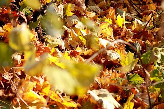 Земля усыпана разноцветными листьями