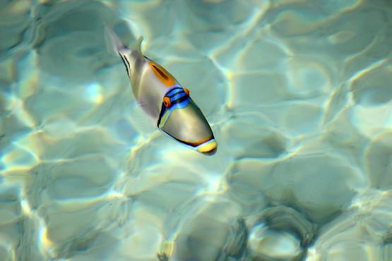 Рыба в прозрачной воде Красного моря