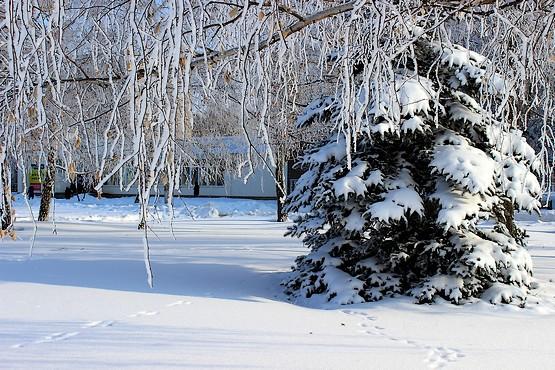 Иней и снег повсюду