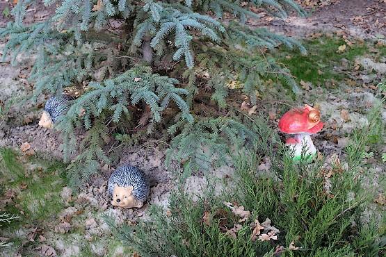 Ёжики и грибы