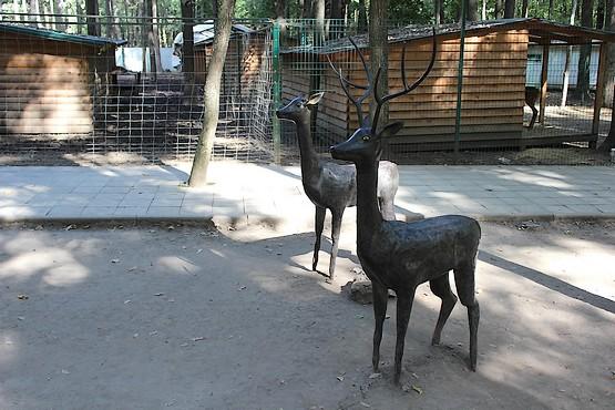Олени в парке
