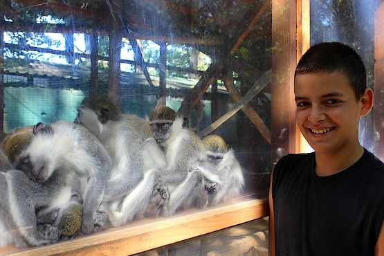 Сын на фоне спящих обезьянок