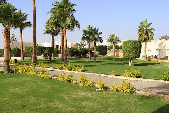 Аллейки в отеле Египта