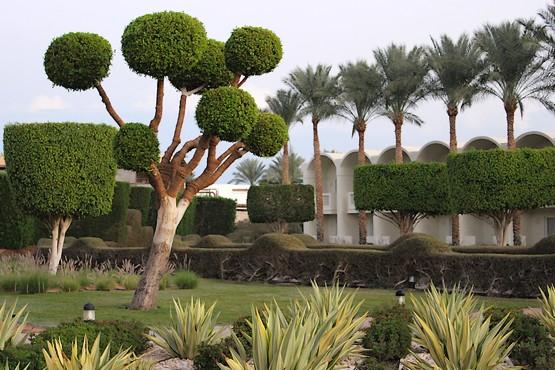 Дерево с шарами из кроны