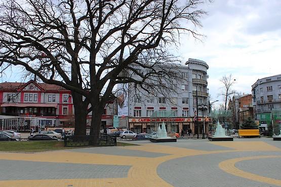 Два вековых дуба в Центре Харькова, каждому по 260 лет