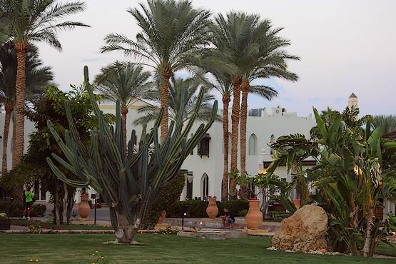 Огромные кактусы в отеле Reef Oasis Beach Resort 5*