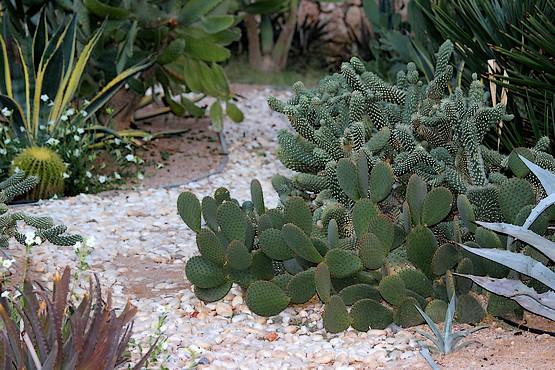 Сад кактусов в отеле Шарм-Эль-Шейха
