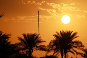 Солнце на фоне пальм в отеле Reef Oasis Beach Resort 5*