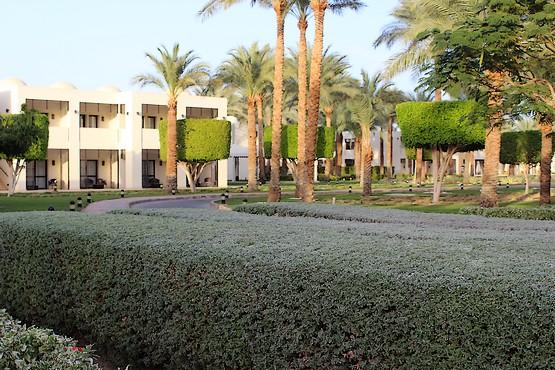 Зелень в отеле Reef Oasis Beach Resort 5*