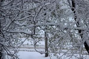 Ожившая природа под слоем снега в апреле