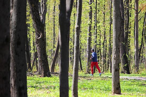 Пробежка по весеннему лесу