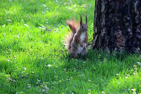 Белочка позирует у дерева
