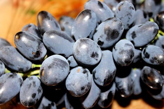 Виноград сорта Чарли