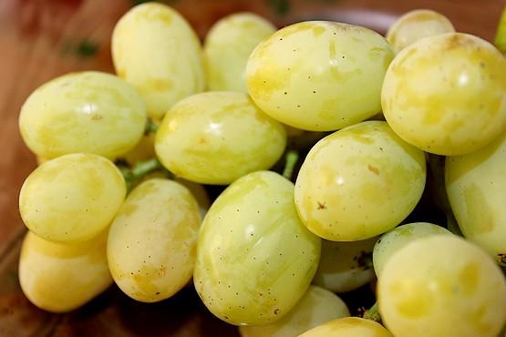 Виноград сорта Макси белый