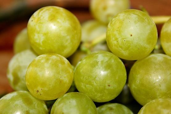 Виноград сорта Талисман