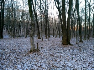 Лес 14 января 2018 года