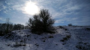 Дерево на горке в лучах солнца