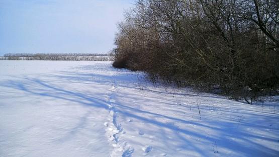 Оставил свой след в снегу на пробежке