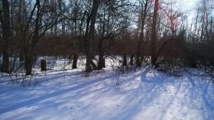 Следы в снегу у леса