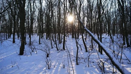 По лесу за солнцем