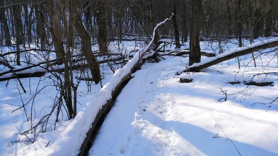 Тропинка в лесу у поваленных деревьев
