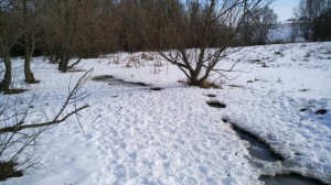 У замёрзшего ручья