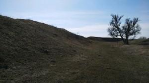 Дерево у крепости
