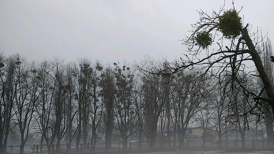 Деревья пришельцы