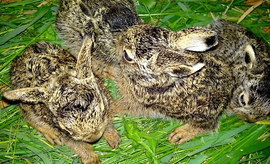 Фотография с позирующими зайчатами