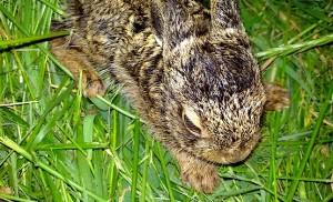 Заяц на траве