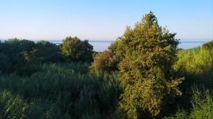 Естественный ландшафт и фауна на побережье