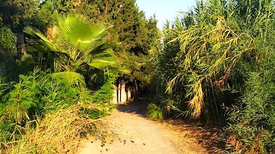Пальмы, сосны, камыши