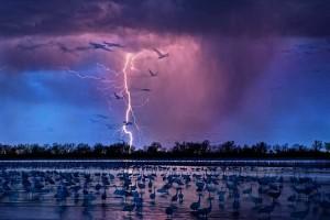 Молнии и птицы